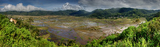 Spiderweb Rice Terrace Panorama