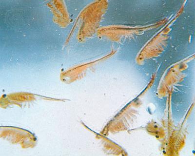 [IMG]  [Kinh nghiệm - Chia sẻ] Liều lượng và các loại thức ăn để nuôi cá betta. 9667731277 376acf4dcf o