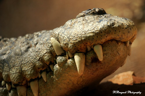 crocodile mouth