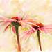Summer Flower Study by Alberto Guillen1