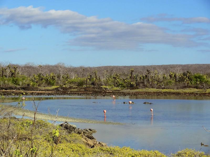 galapagos rabida cerro dragon 163