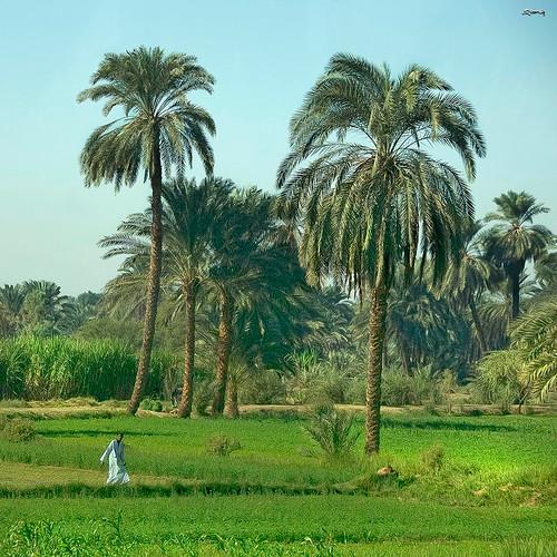 paisajes landscapes nikon gente egypt egipto luxor gent egipte poeple paisatges specialtouch quimg quimgranell joaquimgranell afcastelló obresdart