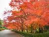 Photo:R0016452 By kagawa_ymg