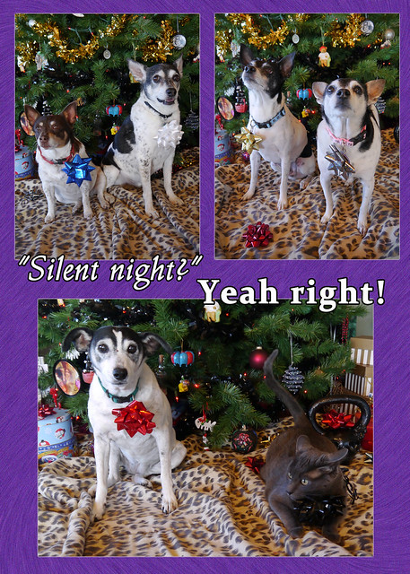 fsmas card 2013 - silent night