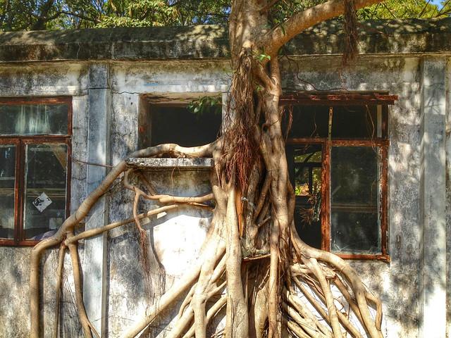 Lantau Island tree