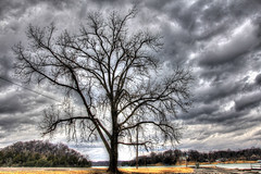 big tree under stormy sky