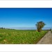 Plaine d'Artois ©Napafloma-Photographe