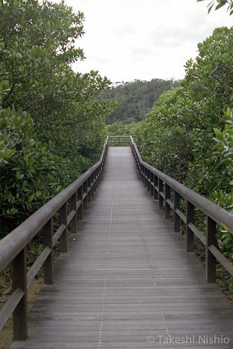 遊歩道 / board walk