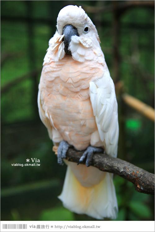 【新竹景點推薦】森林鳥花園~親子旅遊的好去處!在森林裡鳥兒與孩子們的樂園46