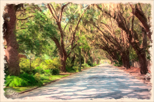 Image of Magnolia Avenue in St. Augustine, Florida