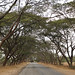 Roads with natural canopy