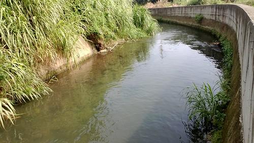 台灣白魚的棲地-水泥化的河床。(圖片攝影:羅聿)