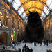 London's Natural History Museum unveils replacement for iconic diplodocus skeleton by dr_loplop