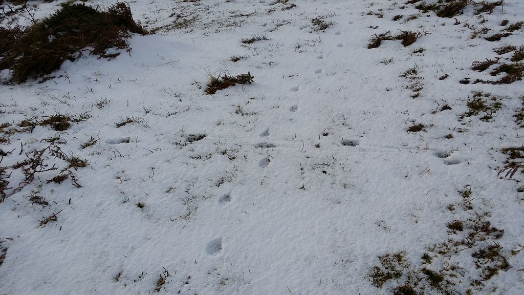 Following animal tracks #sh #dartmoor