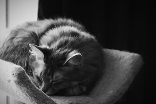Cozy Jack