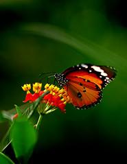 016 Butterfly (Film)