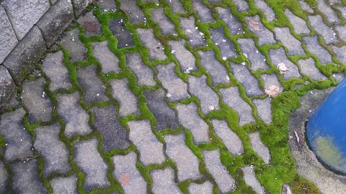 Moss vs. Brick