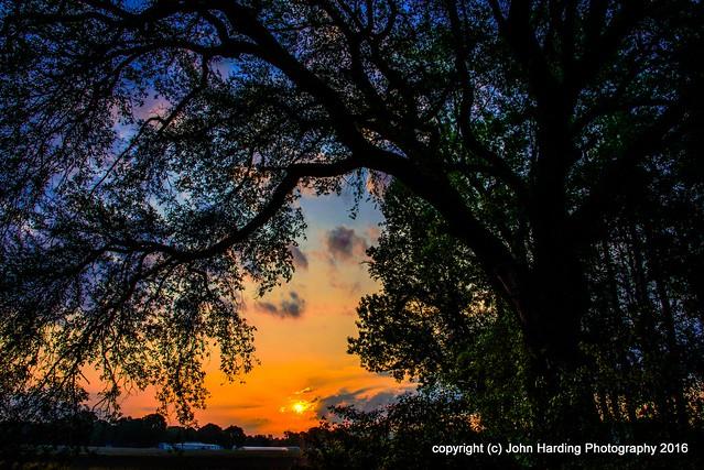 Dawn at the Live Oak