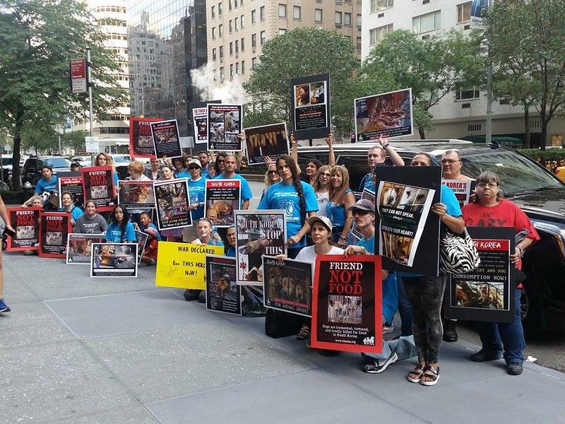 Animals' Battalion Demo_NY_081216