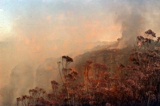 Bushfire, Leura 1957