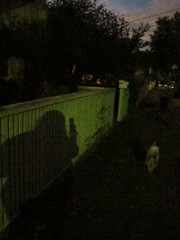 """""""Gillon Oval Walk at night"""""""