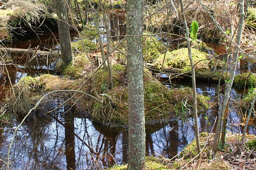 Spruce Lake Bog