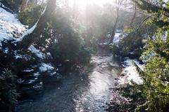 Winter 2013 (Jesmond Dene)  (18)