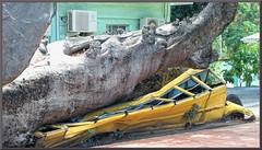 Baobob Disaster