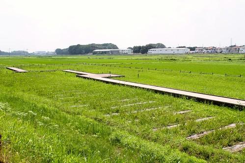 内牧公園(歩道)