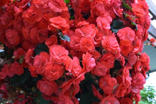 Tanglebank Gardens DSC_0154