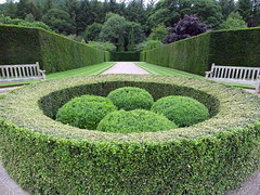 botanical garden, backyard, shrub, garden, grass, plant, green, landscaping, hedge, lawn,