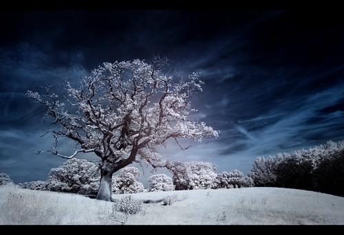 Spooky Tree by JasonPC