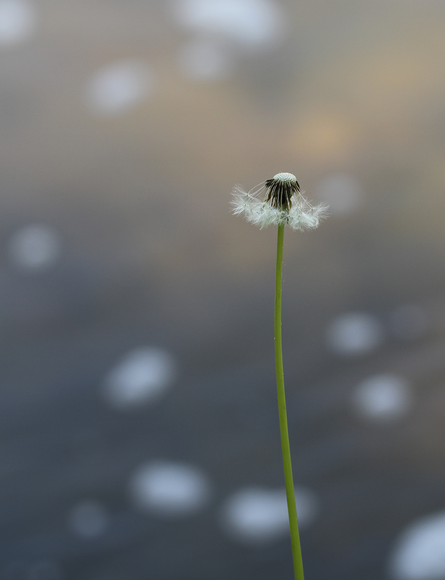 make a wish3