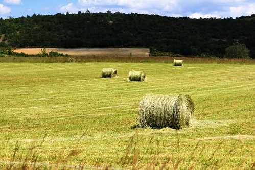 Rolled hay_9476