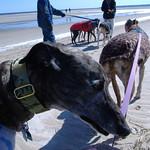 03-30-08 Crane Beach