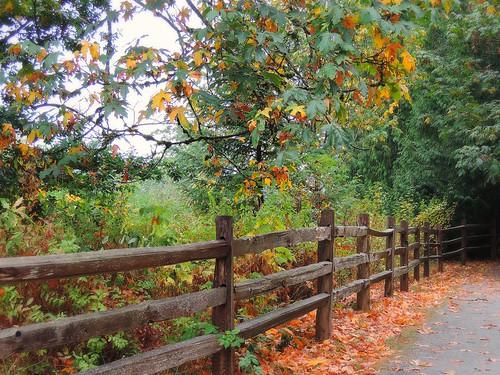 trees nature leaves fence landscape nikon scenery britishcolumbia