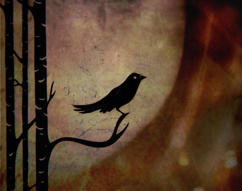Singing Bird ...