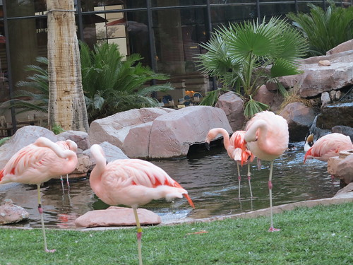 Flamingod by elviina