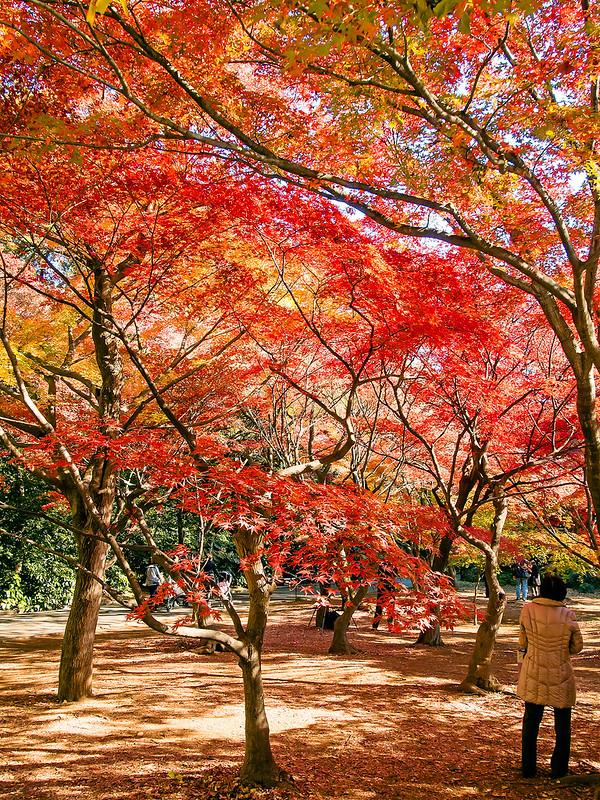 Autumn at shinjuku gyoen