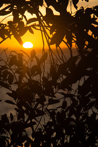 Pôr do Sol em Ponta de Humaitá