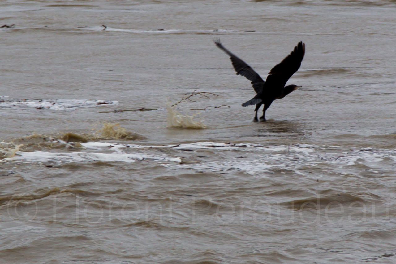 la Garonne en crue, 25 et 26 janvier 2014, Toulouse 12137135873_057ddb8f2d_o