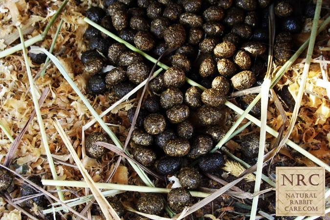 Rabbit Eating Poop http://naturalrabbitcare.com/eww-rabbits-really-eat ...