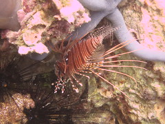 Lionfish (Red) and Starfish (Blue)