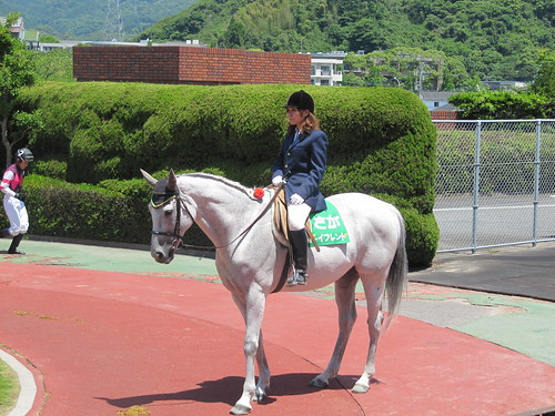 佐賀競馬場の誘導馬ボーイフレンド