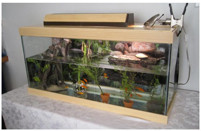 Bamboo Fish Tank 05