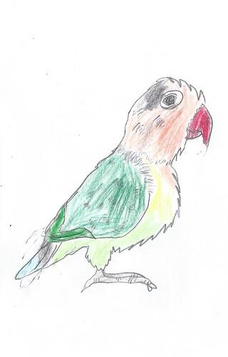 Emma's Parrot- 20Mar14
