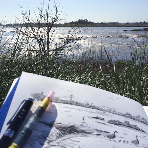 Hiding in the bush while drawing geese on a stroll through the mud.