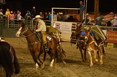 team penning(0.0), western pleasure(0.0), charreada(0.0), pack animal(0.0), fair(0.0), barrel racing(0.0), animal sports(1.0), rodeo(1.0), western riding(1.0), event(1.0), equestrian sport(1.0), sports(1.0), reining(1.0), horse harness(1.0),