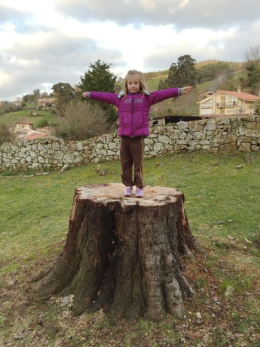 Nora Tree