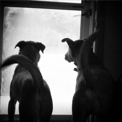 The Squirrel Watchers #Christmas  #familyphotos